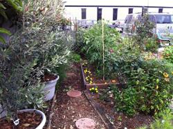 Ann garden June 4 2011