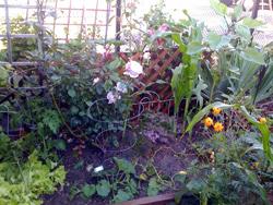 Ann garden August 1