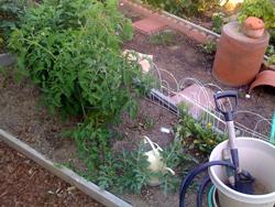 Ann garden July 12