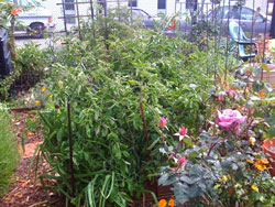Ann Garden May 28