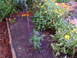 Ann garden May 30