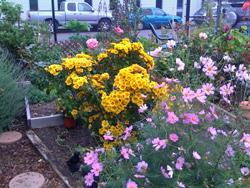 Ann garden oct 15
