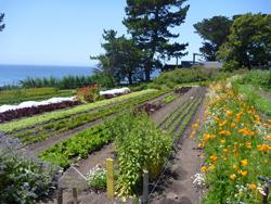 Esalen garden 2011