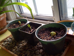 Seedlings on March 30