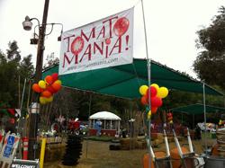Tomatomania 2011