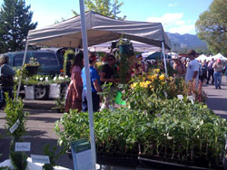 Whitefish Farmers Market