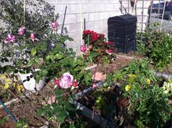 Ann garden January 1 12