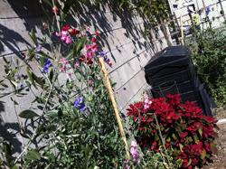 Ann garden March 3 12