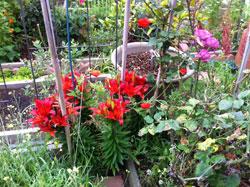 Ann garden May 2013