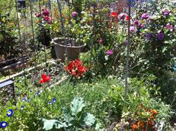 Ann garden May 2014