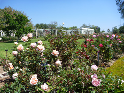 Huntington Rose Garden